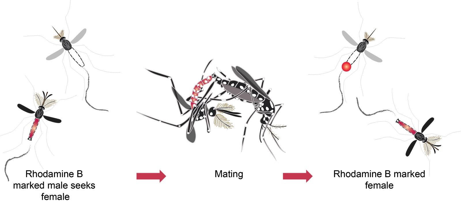 Projekt Debug využívá strojové učení ke snížení populace komárů