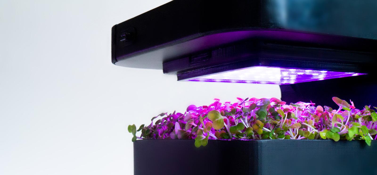 Crop IQ používá chytré osvětlení k pěstování výživnějších a chutnějších bylinek