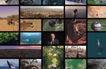 Projekt chránící zvířata vyhrála hlavní cenu v kategorii Sustainable Development Goals