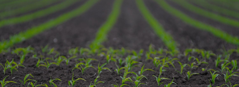 Výzkumníci vyvinuli rostliny, které dokáží zachytit více oxidu uhličitého v atmosféře