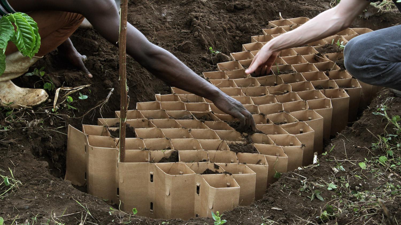 Kartonový sázecí nástroj zlepšuje produkci potravin